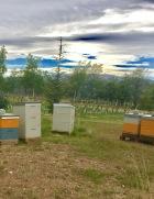 Hives Felton Rd
